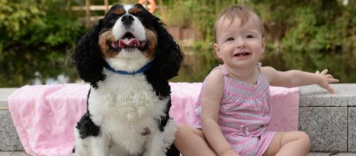 O cão Louie ajudou no salvamento da vida de Chloe Showell