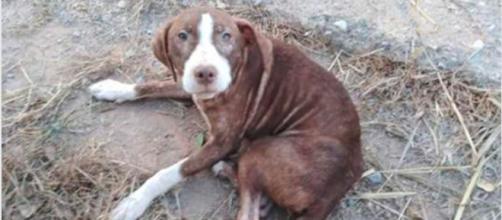 Spagna, cane randagio aiuta malato di alzheimer - Leggo.it