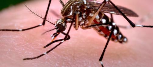 West Nile, il professor Galli rivela come difendersi da febbre tropicale e zanzare: ecco cosa fare.
