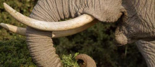Matanza de elefantes en Botswana causa revuelo en el mundo