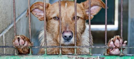 Animals seized by authorities from Hewitt home Dog in cage - via Pixabay - Pixabay.com
