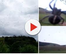 Chuva de aranhas em Minas Gerais assusta moradores (Reprodução)