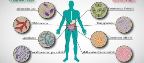 Il microbiota intestinale può predirre l'obesità infantile