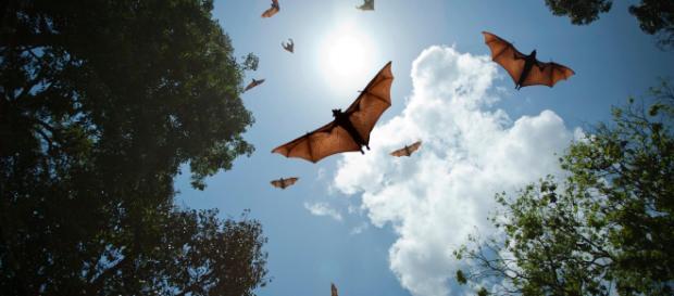 Měnglà: il virus cinese, simile all'Ebola, diffuso dai pipistrelli