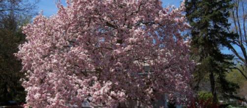 Árvores são boas opções para quem quer beleza e utilidade.