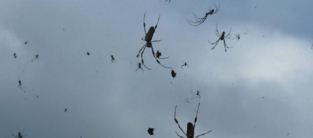 Pioggia di ragni nel cielo del sud est del Brasile per effetto di caldo e umidità.