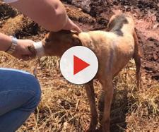 Cachorro estava muito debilitado - Foto: Associação de Proteção aos Animais de Rio Brilhante/Divulgação