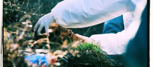 Lo scheletro è stato ritrovato dagli uomini della Forestale di Alghero.