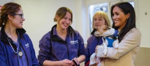 Meghan Markle cuddles puppies on Mayhew animal charity visit. [Image source/Breaking News YouTube video]