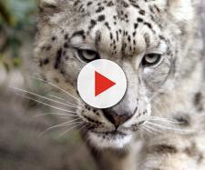 Staminali, una salvezza per gli animali a rischio estinzione? - fanpage.it