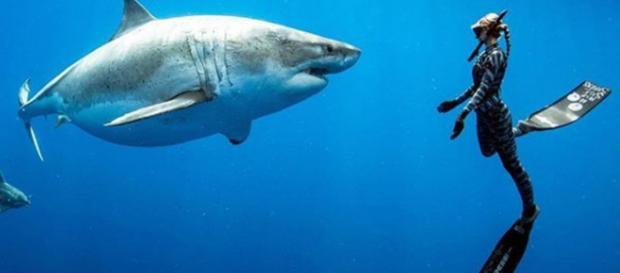 La biologa marina Ocean Ramsey ha incontrato 'Deep Blue' esemplare di squalo bianco di oltre sei metri: è tra i più grandi mai censiti.