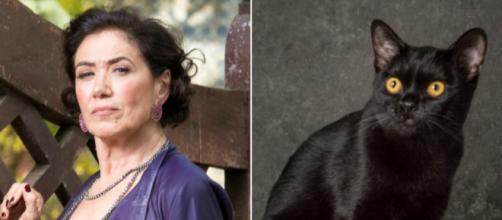 Valentina e o gato León, que em breve se tornará humano. (Reprodução/TV Foco)
