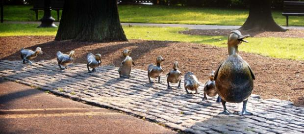 Make Way for the Ducklings in a Boston park. [Image theilr/Flickr]