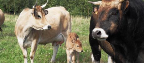 Prise de conscience autour du bien-être animal