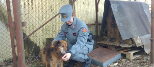 Maltrattamenti di animali a Grezzana, Villafranca e Dolcè