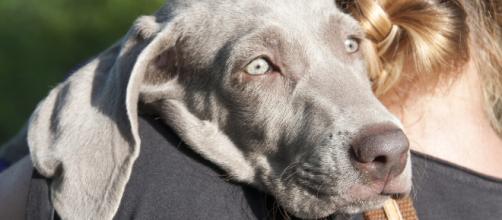 Lesioni acute cerebrali nel cane e nel gatto: si parla di ictus ... - ambulatorioveterinariolevante.it