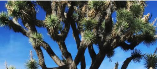 Joshua Tree National Park. [Image source/GoTraveler YouTube video]