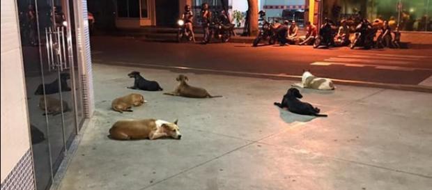 Morador de rua é internado e cães aguardam saída do dono. (ONG Amigos de Patas Cianorte/Divulgação)