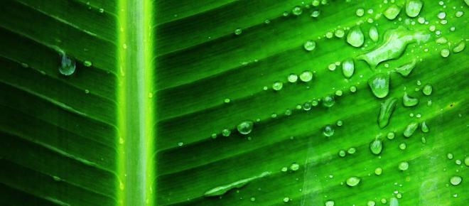 Una modifica alla fotosintesi delle piante potrebbe risolvere la fame nel mondo