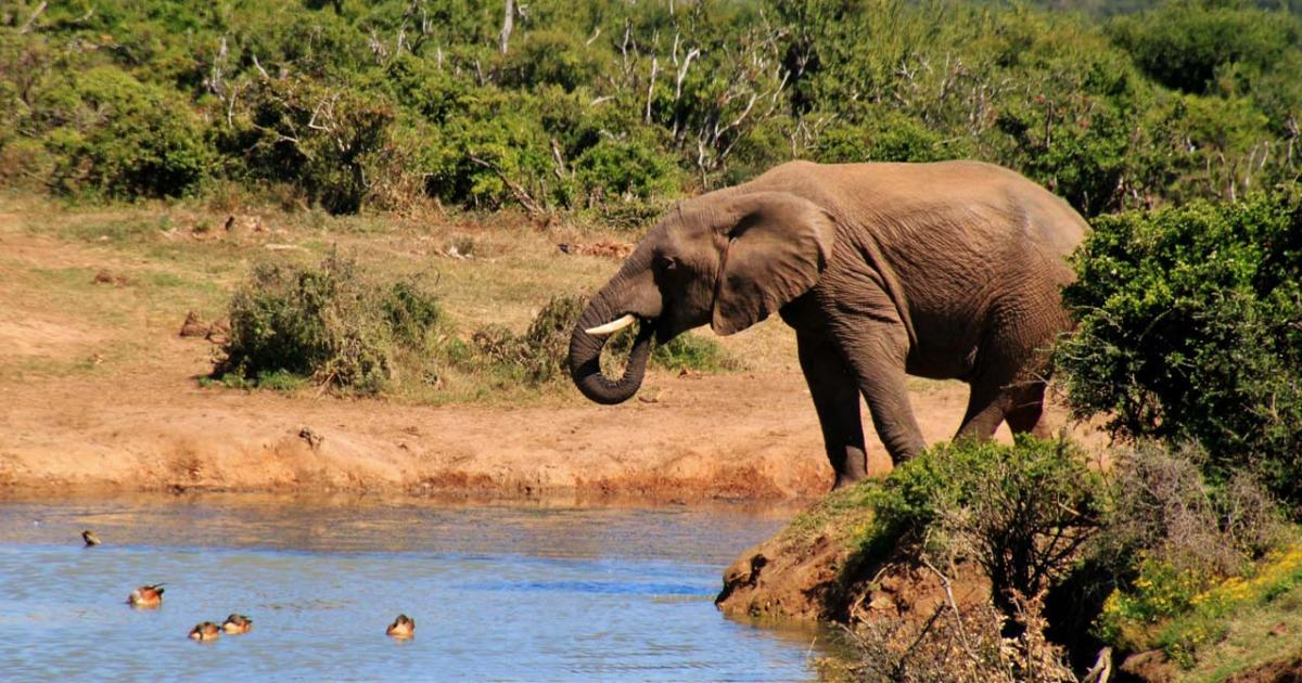 safari film 2019