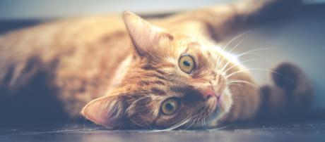 Detalhes sobre alimentação e sono dos gatos. (Foto: Dariusz Sankowski)