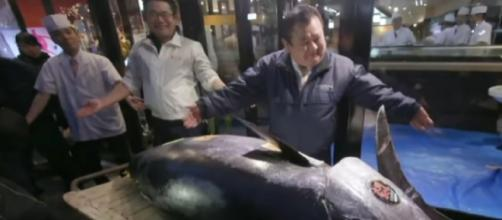 Bluefin tuna sells for a record $3.1M in Tokyo auction. [Image source/CBS News YouTube video]