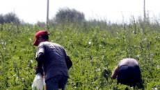Legge sul caporalato in difesa dei braccianti applicata nel Lazio: arrestato imprenditore