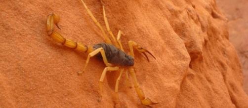Oroscopo, classifica 14 ottobre: Scorpione trasgressivo, Cancro geloso.