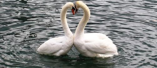 Loroscopo dell'amore di coppia del 16 ottobre
