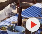 Un chat demande toujours à manger comment y remédier