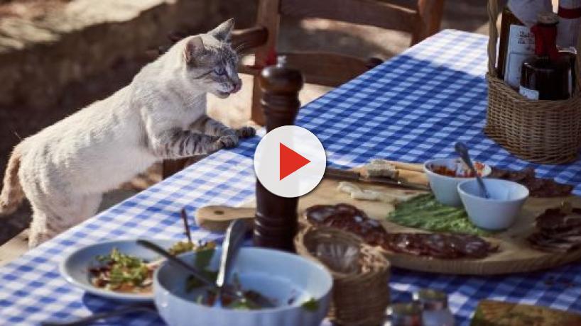 Mon chat a tout le temps faim, 6 raisons qui expliquent pourquoi