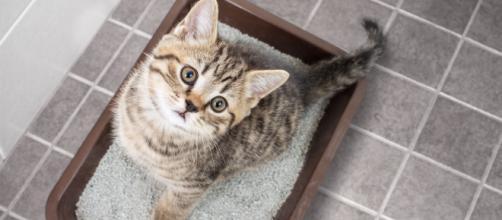 Mon chat urine sur mon lit : pourquoi et que faire ? | Magazin zooplus - zooplus.fr