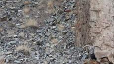 El último reto viral que invita a encontrar un leopardo de las nieves en una foto