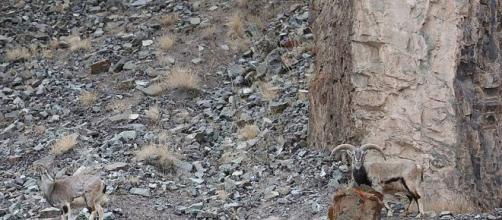 El último reto viral: ganas, si ves el leopardo