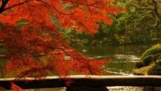 L'autunno in Giappone: si ripete la tradizione del Momijigari