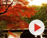 L'autunno in Giappone: è il momento del momijigari.