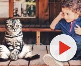 Intégration du chat - Les Amis des Chats Libres de Douarnenez - douarnenez-chats-libres.org