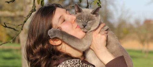 5 signes qui prouvent qu'un chat est stressé