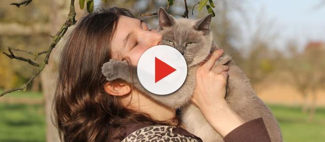 5 signes qui ne trompent pas sur l'anxiété d'un chat