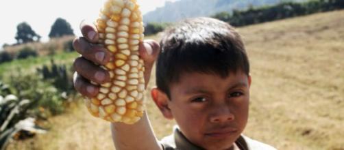 Buscan proteger a los niños del trabajo agrícola. - desinformemonos.org