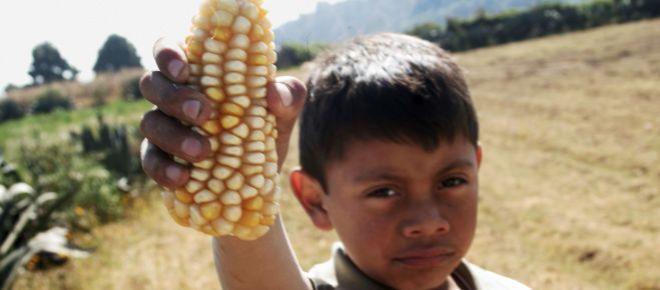 World Vision: 2.5 millones de niños mexicanos trabajan en el campo sin seguridad