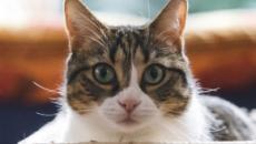 5 astuces imparables pour enlever l'odeur du pipi de chat