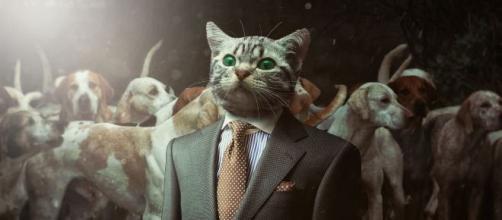 5 astuces faciles pour enlever l'odeur du pipi de chat