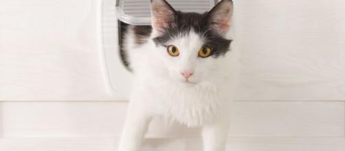 Chatière pour chat : quel modèle choisir ? Comment l'installer ... - doctissimo.fr