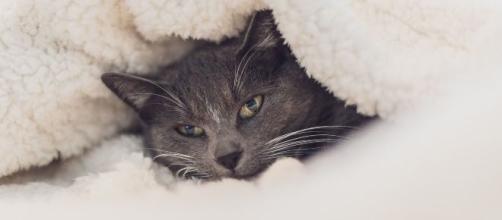 5 conseils pour protéger efficacement un chat du froid
