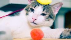 5 choses qu'un chat ne supporte pas chez son maître