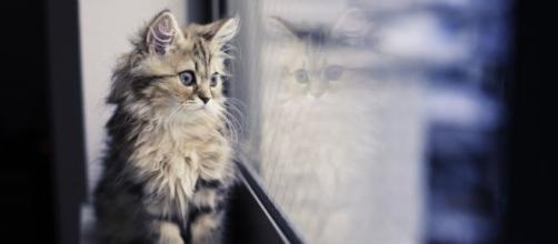 Fond d'écran : chat, fenêtre, réflexion, moustaches, Maine Coon ... - wallhere.com