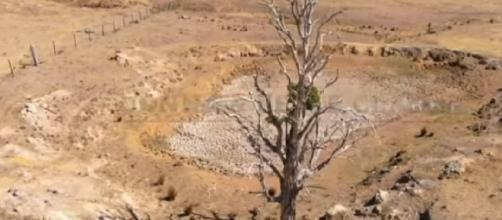 The crippling drought is stretching into even the greenest parts of Australia. [Image source – ABC News (Australia) YouTube video]