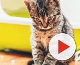 Apprendre au chat à utiliser sa litière - Chiens, chats et tous ... - animal.ch