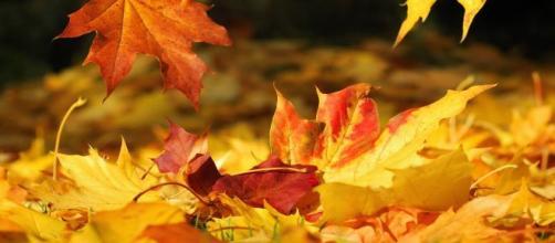UK, 26enne tenta di avere un rapporto con un mucchio di foglie: sarà processato